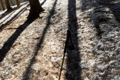 笹平手前の杉林の影